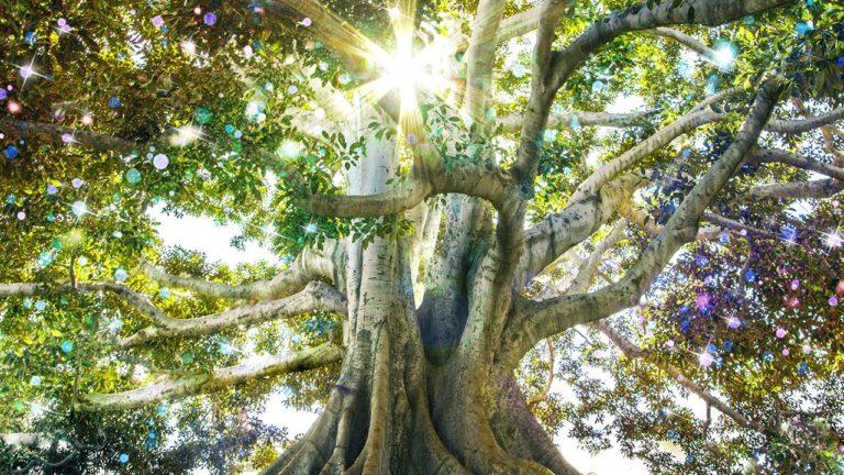 """Der Gedankenreisentext """"Der Baum der Kristalle"""" dient der Entspannung unter Einbezug der Sinne"""