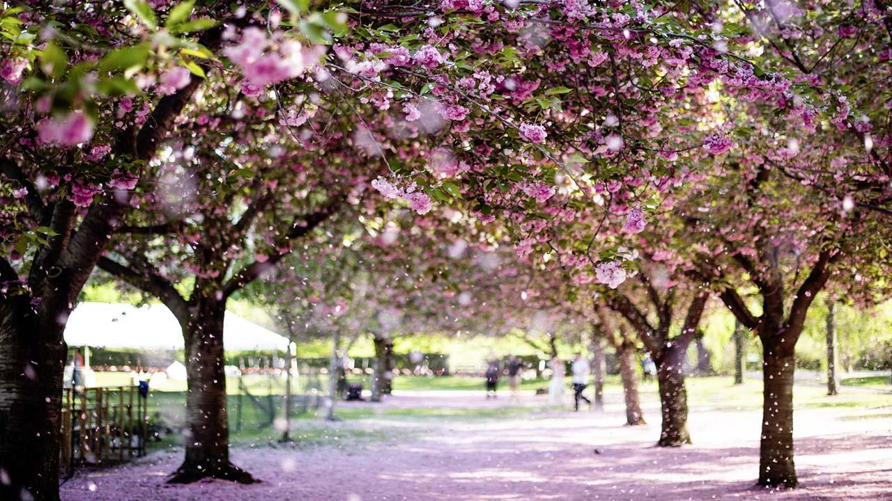 Fantasiereise Frühling