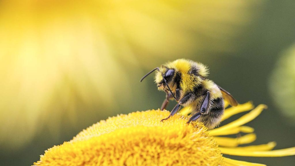 Kurzgeschichte mit Biene Summ-Summ, die ihr Volk rettet.