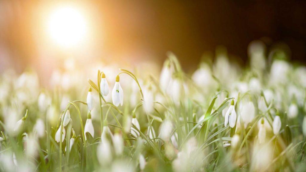 Traumreise Frühling für Kinder