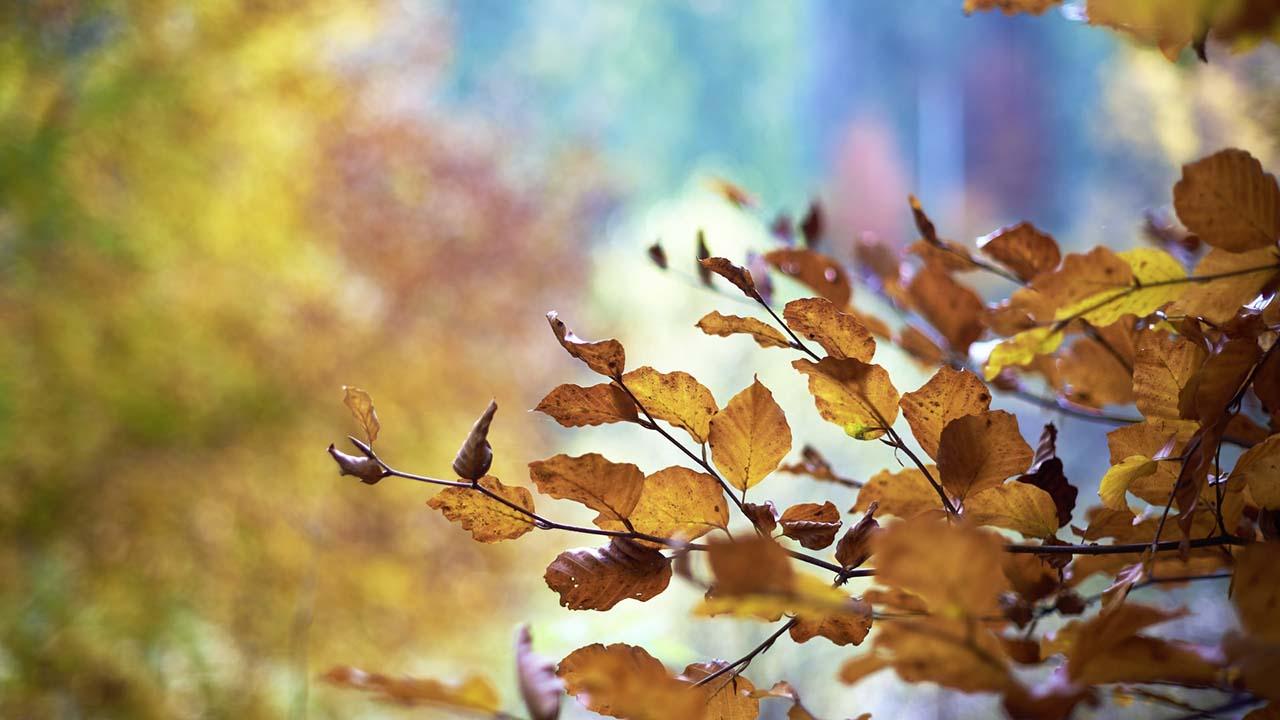 Traumreise Herbst